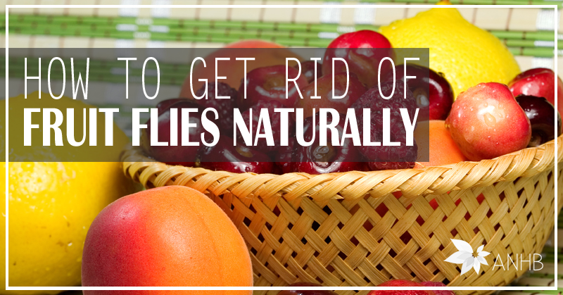 is it healthy to eat a lot of fruit home remedies for fruit flies
