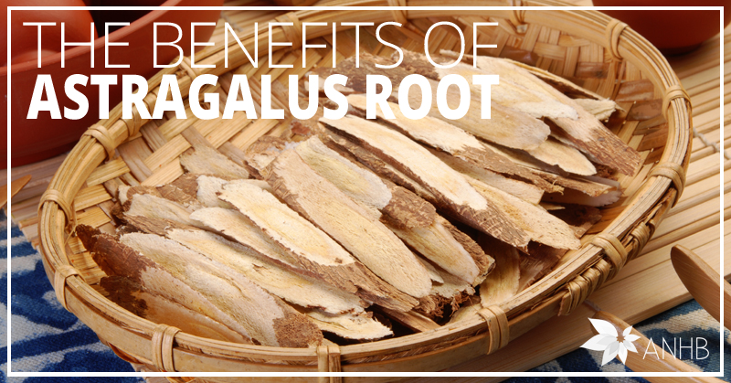 The Benefits Of Astragalus Root Updated For 2018