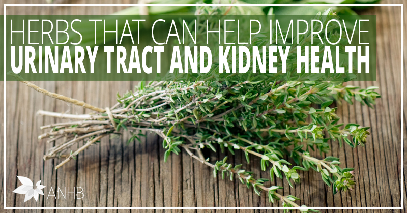Herbs That Can Help Improve Urinary Tract And Kidney