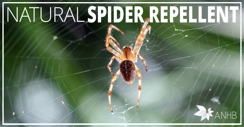 Natural spider repellent all natural home and Natural spider repellent