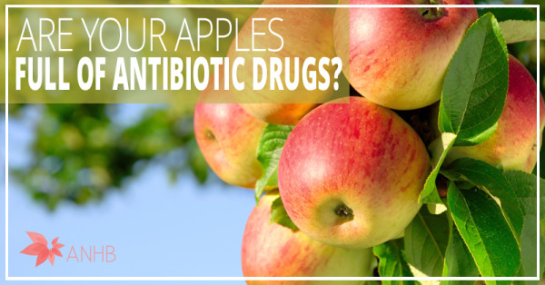 Are Your Apples Full of Antibiotic Drugs?