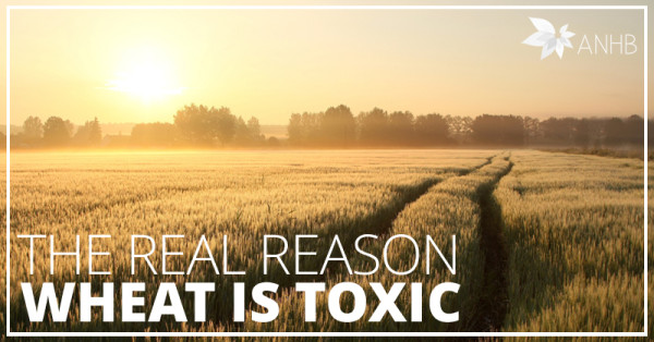 The Real Reason Wheat is Toxic