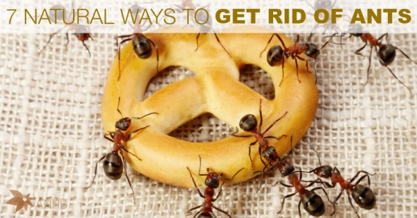7 Natural Ways to Get Rid of Ants